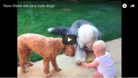 video-now-these-dogs-are-well-trained-114609