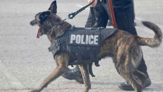 Weapons Seized After Police Raid Hotel Room on Pembina Highway
