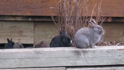 Bunny Burden in Canmore