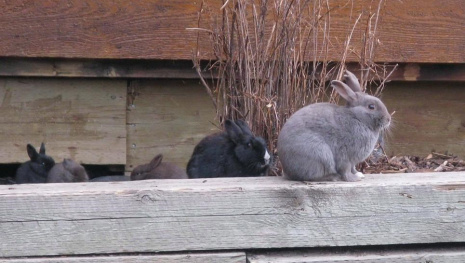 bunny-burden-in-canmore-115509