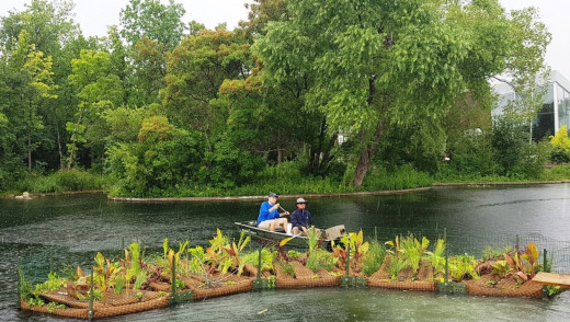 Floating Treatment Wetland Launched in Riley Family Duck Pond