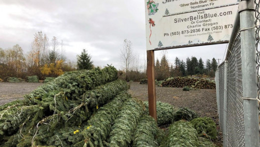 Better Things to do With Christmas Trees