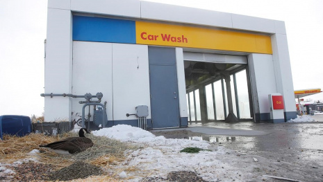 canada-goose-makes-winnipeg-car-wash-its-winter-home-117063