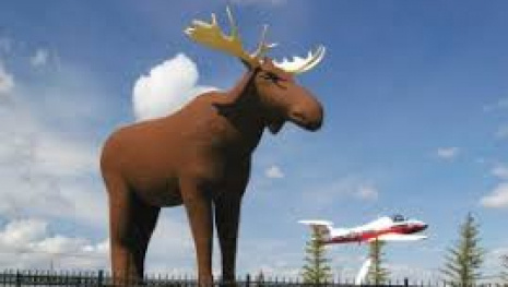 moose-jaw-wants-to-challenge-norway-for-tallest-moose-117080