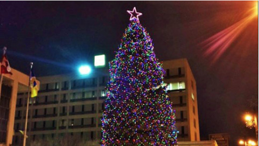City Needs Large Spruce Tree for Christmas Display