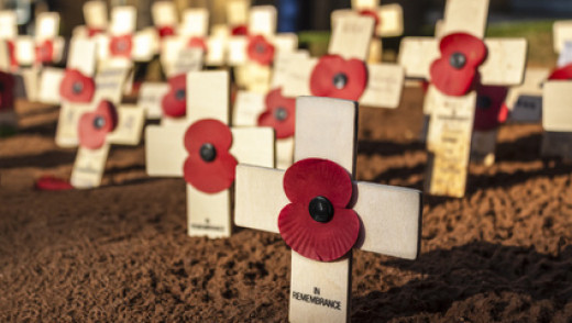 A Poppy for Intolerance