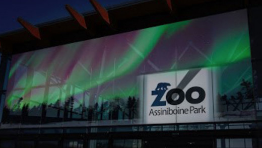Zoo Lights Festival Starts This Weekend