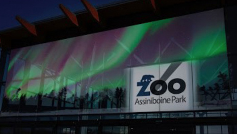 zoo-lights-festival-starts-this-weekend-118273