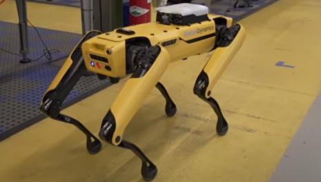 covid-19-robot-dog-118844