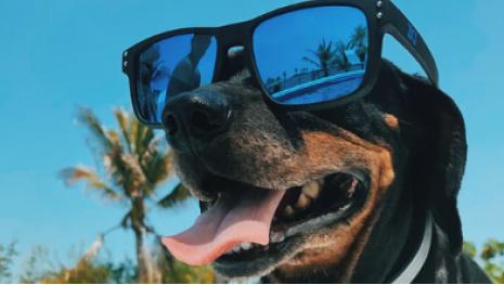 dog-days-of-summer-119007