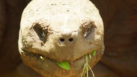 tortoise-back-home-119251