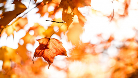 weather-networks-fall-winter-forecast-119368