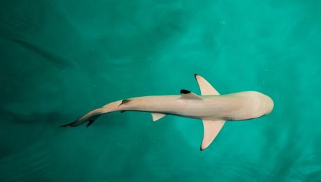 baby-shark-torture-119517
