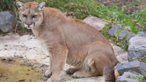 zoo-euthanizes-max-120303