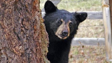 Bear Cub Kept In House