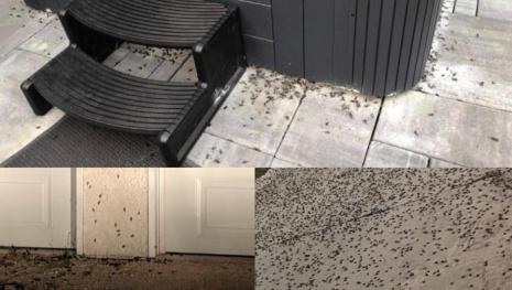cricket-problem-in-winnipeg-neighbourhood-121757