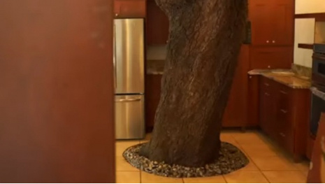 House With Tree In Kitchen