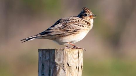 manitoba-study-covid-impacting-birds-122032