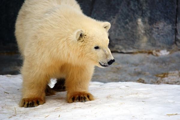 Help Name the Polar Bear Cubs